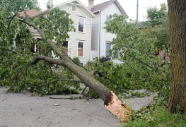 Trees and power lines: common hazards and key precautions