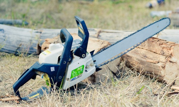 When and why you should never cut down trees yourself
