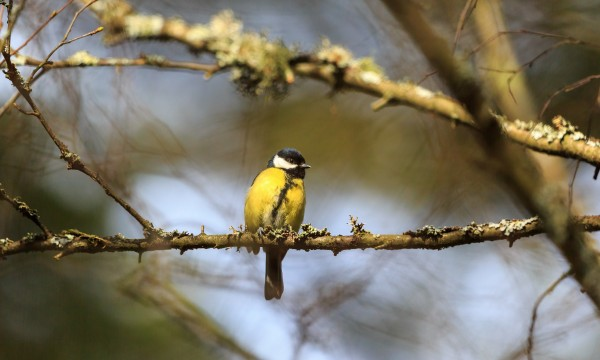 How to make your garden more attractive to birds