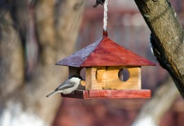 Tips for cleaning bird feeders, baths and houses