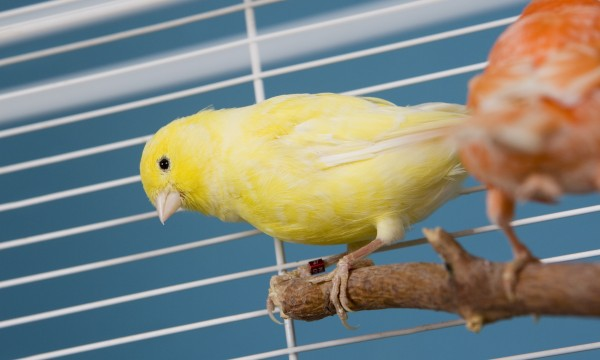 Simple tips to keep your pet bird happy