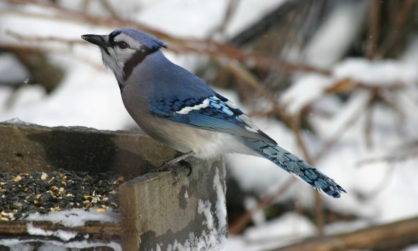 3 wintertime treats that wild birds love