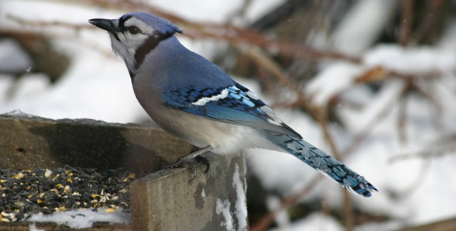 3 wintertime treats that wild birds love