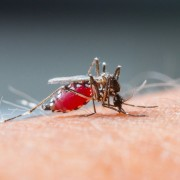 Healing stings and repelling bugs naturally