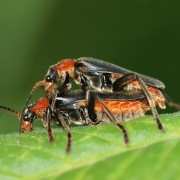 Repel insects from your home the natural way