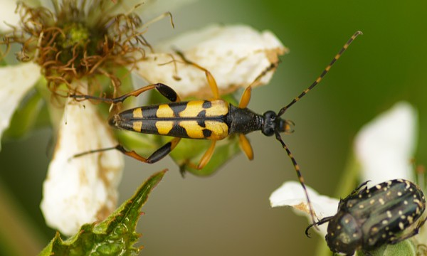 Rid your home of pests the natural way