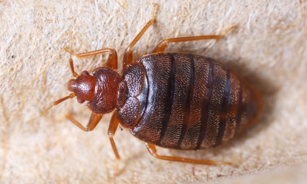 Yes, you can organically repel insects from your home