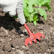 Cheap gardening tips you should know