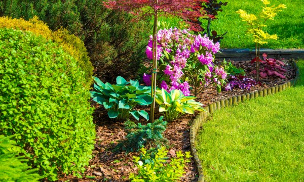 7 tips for a low-cost, easy-care yard