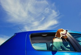 Dog hair on your car upholstery? De-fur with these DIY tips