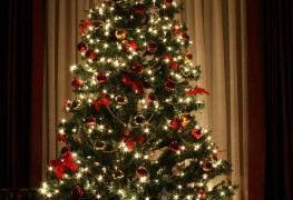 Advice on keeping your Christmas tree fresh