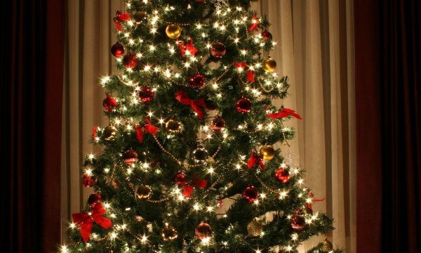 advice on keeping your christmas tree fresh smart tips. Black Bedroom Furniture Sets. Home Design Ideas