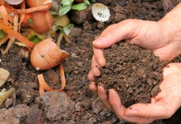 How to balance browns and greens for a healthy compost bin