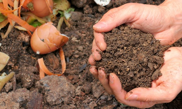 e1e636abc4ea8 How to balance browns and greens for a healthy compost bin | Smart Tips