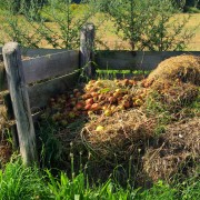 Tips for choosing the best compost method for your needs