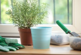 Tips for preparing container gardening
