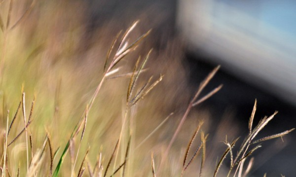3 ways to kill crabgrass for good