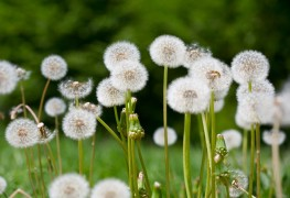 Banishing weed invaders from your lawn