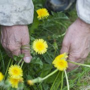 7 weed-control basics for the garden