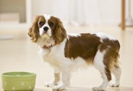 2 healthy homemade dog food recipes