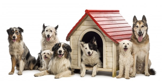 Tips to clean a dog kennel and prevent fleas