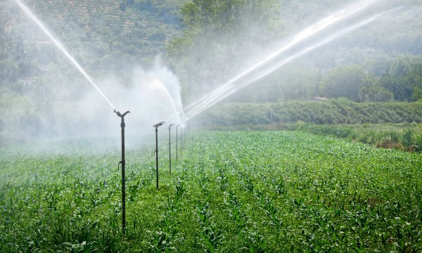 5 effective watering devices for your lawn
