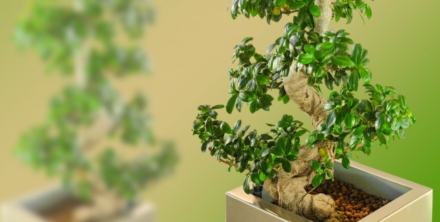Learning to hand-tailor your dwarf tree