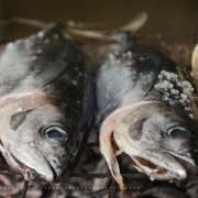 How to cook freshly caught fish
