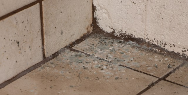 Tips for preventing mould and dry rot