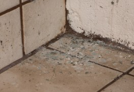 Tips for fighting basement mildew