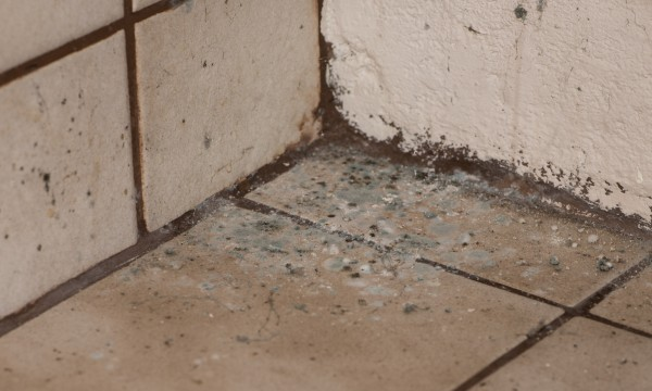 Tips For Fighting Basement Mildew, How To Freshen Up A Musty Basement