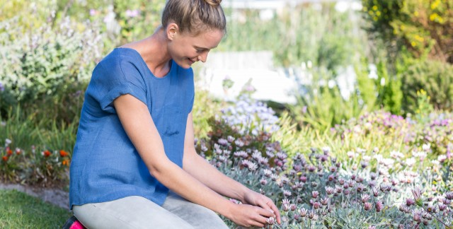 Chemical-free ways to deal with garden pests