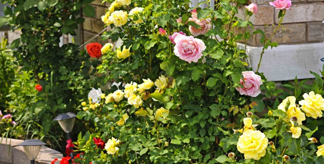 Keep your pipes healthy with these gardening tips