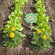 5 tricks for healthier, richer garden soil