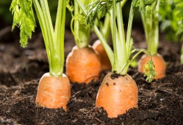 Fruits and vegetables to grow in cold climates