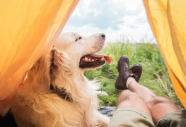 How to actually enjoy camping with a dog