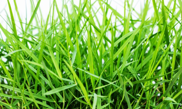 Grow grass from seed and save money