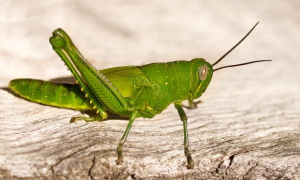 Organic solutions to get rid of garden pests