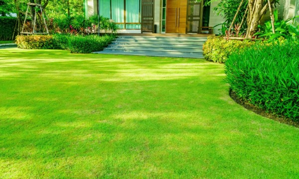 7 lawn care hacks for great-looking grass