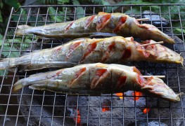 Seafood main dish: recipe for grilled catfish fillets