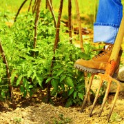 How to grow plants in hard, rocky soil