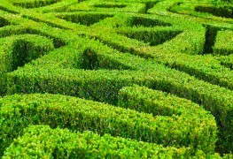 How to take care of your garden hedges