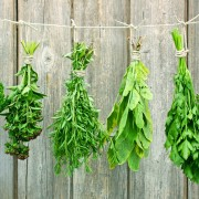 10 herbs that can enhance the flavour of your meals