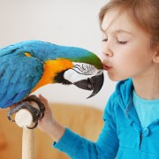 Tips for keeping your bird safe and tick-free at home
