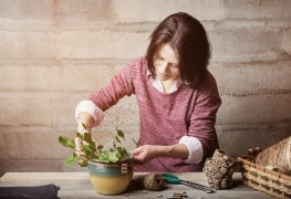 Flower power: reblooming holiday houseplants