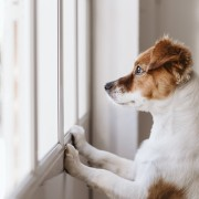 How to prep your pets for post-pandemic living