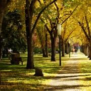 5 ways to enjoy the Thanksgiving long weekend in Edmonton