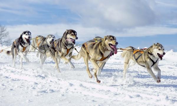 6 winter activities to enjoy in Alberta Parks near Calgary