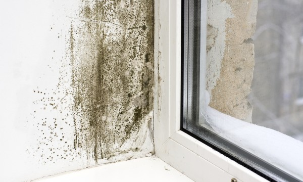 Spy with your little eye: how to find mould in your home