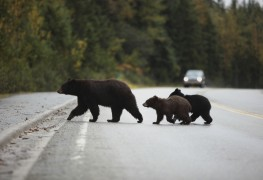 Must-know tips to help you camp safely in bear country